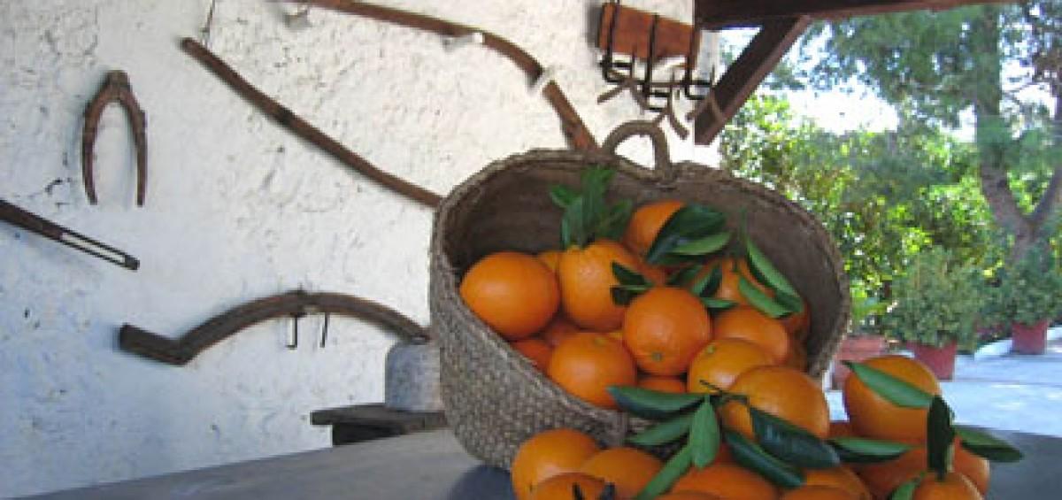 Naranjas-1