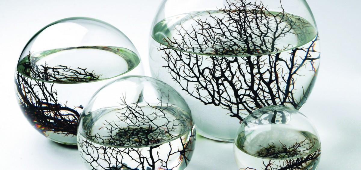Ecosferas1